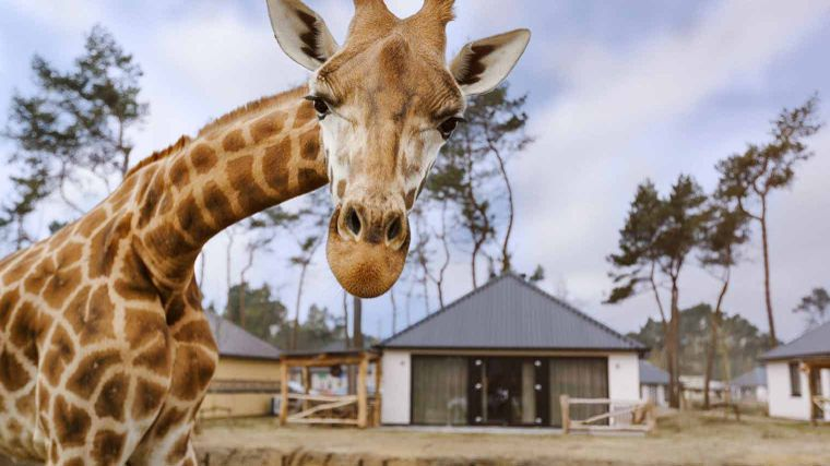 Weekaanbieding: Safari Resort Beekse Bergen