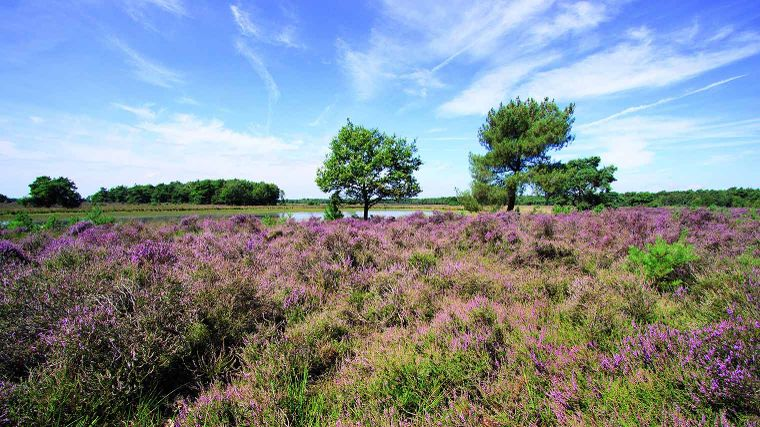 Over de heide in Someren