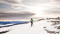 Wintersport Zweden: op de hondenslee