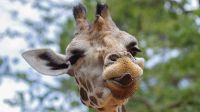 Wat kost een dagje dierentuin